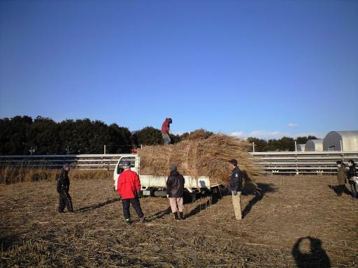 茅刈りボランティア