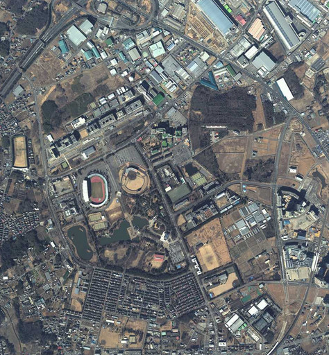 2013(平25)年柏の葉.jpg