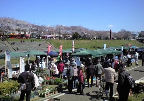 うんがいい花見2012_04.jpg