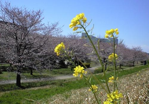 におどり公園2012年4月7日