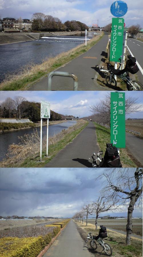 五行川サイクリングロードの桜並木