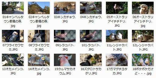 キャンベルタウン野鳥の森.jpg