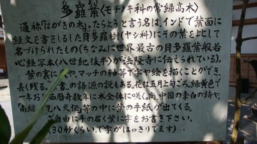 タラヨウ(多羅葉)の木.JPG