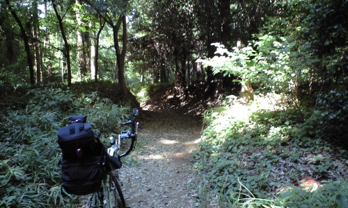 根戸の林道