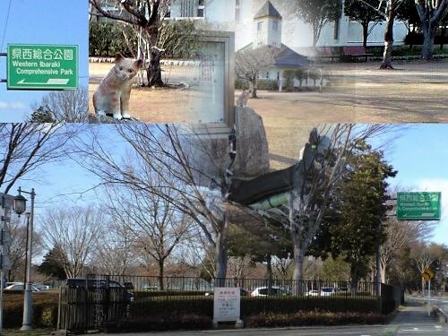 県西総合公園の猫(筑西市)