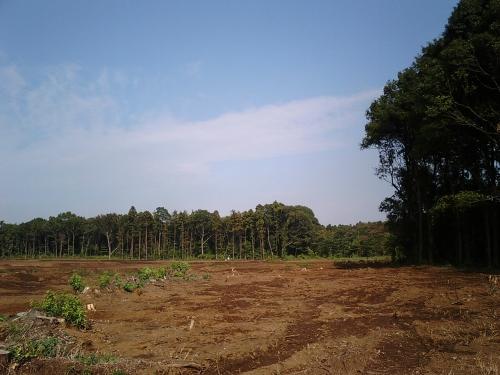 どんどん縮小する市野谷の森(おおたかの森)