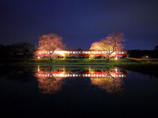 飯給駅の桜ライトアップ.jpg
