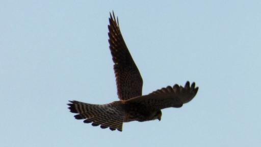 LUMIX DMC-TZ40 と DMC-FZ70で野鳥撮影.jpg