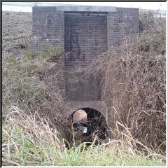 利根運河の樋管03