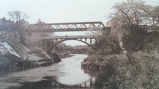 03利根運河の桜並木過去写真01.jpg