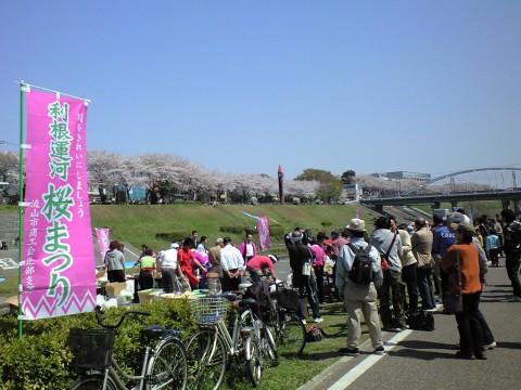利根運河桜まつり03