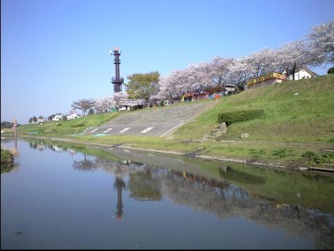 利根運河桜まつり02
