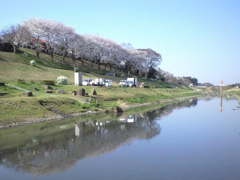 利根運河桜まつり01