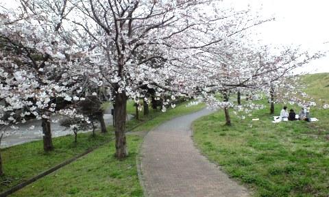 利根運河の桜,におどり公園
