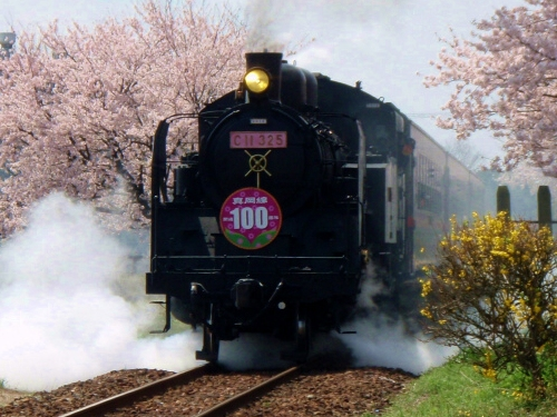 C11-325 桜色プレート