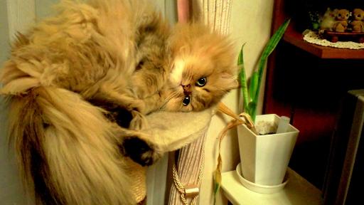 ふて寝ネコ
