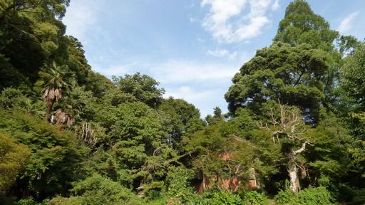 トトロの森.JPG