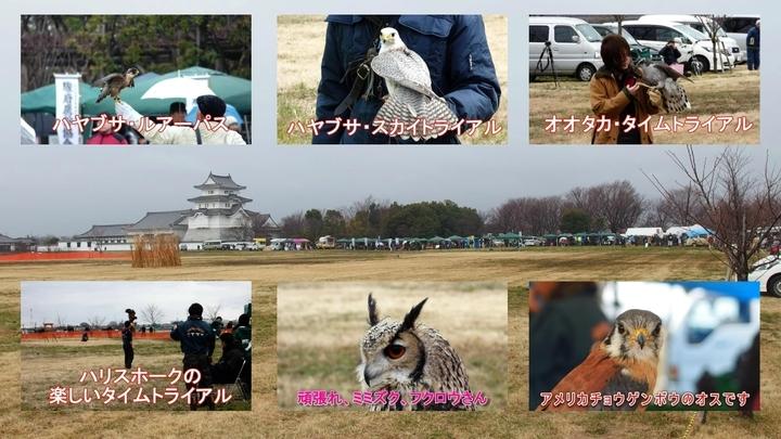 フライトフェスタ2015 猛禽大集合の動画集.jpg