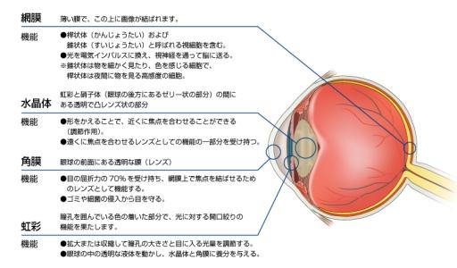 人間の網膜.jpg