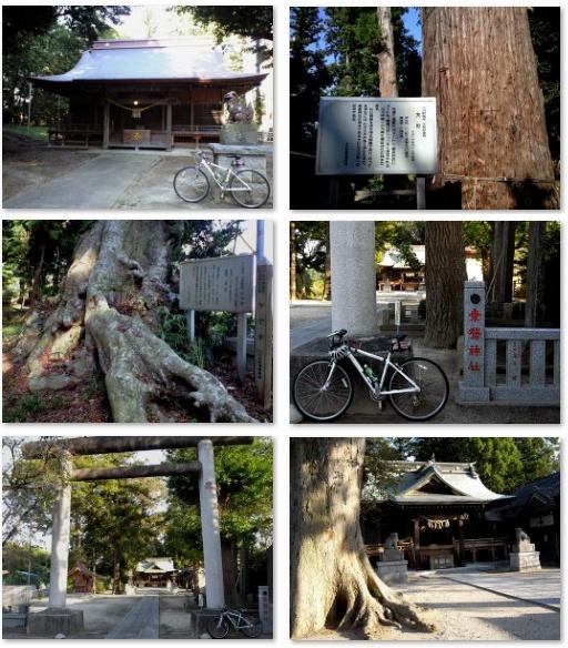 鹿島神社の巨木と素鵞神社