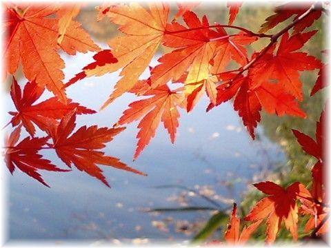 理窓公園の紅葉