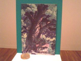 トトロの森を描いた人01