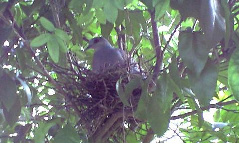pigeon2009_01.jpg