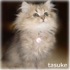 tasuke33